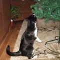 Новому году наша кошка была рада больше всех!   Она помогала нам наряжать елку...