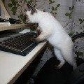 маленький компьютерный гений))))))))