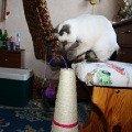 Игрушка-точилка коготков)))