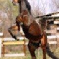 """Фото моей знакомой по конному спорту - \""""Фефа Королева\"""""""