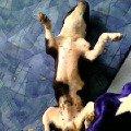 Ремзес после тяжелого непосильного труда,   весь день пес спал,   так устал...<br />