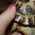 вот что случилось с панцирем моей маленькой рептилией(((((