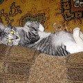 Соня любит отдыхать,   лежа на спине