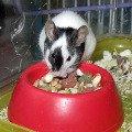 Японская мышка Кнопка