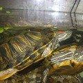 Мои черепахи