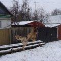 Собака учится летать