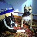 Мои любимые Рамзес и Джессика!