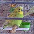 Моя любимая птичечка Кешуня!