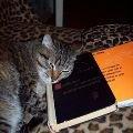 Самый умный кот:)