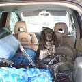 Шери заняла своё место в авто на время поедки на озёра.