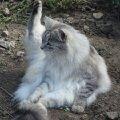 """Бастер в саду. \""""Кошачья йога\"""""""