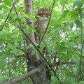 Кот Васька любит гулять на улице. Но поскольку он боится собак (и это правильно),   то забирается на дерево,   так что сразу его и не найдешь.