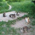 """Бездомные кошки около санатория \""""Монино\"""". Конечно,   это не дикие звери,   но и не домашние,   к сожалению. Так что это одичавшая домашняя природа сегодня."""