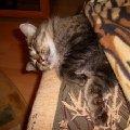 Спит усталая Маруся