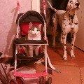 Марик (кот) и Гарик (пес). Мои любимые создания.