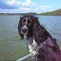 Шерик очень любит кататься на лодке.