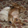 Спят ухталые Данюшки и Сёмушки!