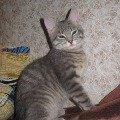 Моя любимая кошка Пуся.
