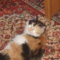 Красавица сибирячка Ксения