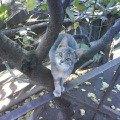Наш самый любопытный котенок