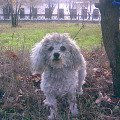 Это мой пес Фиби на прогулке