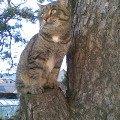 Просто кот Сноп и дерево...