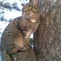 Слияние с природой,   т. е. с деревом...