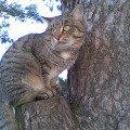 И опять то же самое дерево...