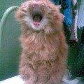 К сожалению-это не наш кот,  а нашей подруги...Когда были у нее в гостях успели сфоткать-вот такой забавный снимок пулучился=)