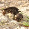 Необыкновенная гусеница