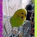 """Это Прошечка. Очень умная птичка ,   любящая позировать. Фотосессия \""""Мы красивые птички\"""""""