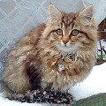 Это девочка Пуся. Сестра Мурзилкина 3 месяца ей. На даче