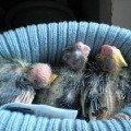 Детки уснули пока убирается гнездо<br />