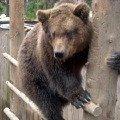 """Зоокомплекс \""""Три медведя\"""" <br />"""
