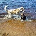 """Давайте купаться,   плескаться...<br /> Карелия2009,   Зоокомплекс \""""Три медведя\"""""""