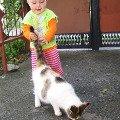 Как мы любим кошек...<br />