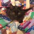 Котечка в одеяле.