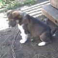 Сторожевой просто-таки пес