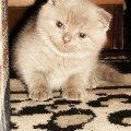 Это моя малышка - красавица Лейлочка :)