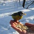 Поможем птицам перезимовать!