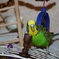 и Кеша кушает