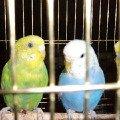 Мои птички!