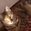 Моя красотулечка,   самая кайфовая кошка!   МАЙИЧКА!