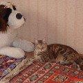 Моя красотулечка,   моя лапочка кошка!   МАЙИЧКА!