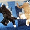 Алиса и Дельта спят вместе