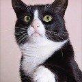 """В дар крупный,   просто роскошный кот Мейсон,   настоящий мужчина в самом расцвете сил<br /> пол- кот,   кличка Мэйсон<br /> порода- метис<br /> возраст- 1,  5 года <br /> здоровье- здоров,   кастрирован,   привит.<br /> мини-описание: Очень крупный,   очень красивый- просто роскошный молодой кот благородного окраса \""""маркиз\"""",   настоящий мужчина в самом расцвете сил,   красавчик с очень нежной и ранимой душой!   Ласковый и доверчивый умница. <br /> 8-926-503-69-54 Елена elena0777@rambler.ru <br /> http://i019.radikal.ru/0910/b9/3c539893d5bd.jpg<br /> http://i053.radikal.ru/0910/74/ca4de340d3e7.jpg<br /> фоторабота Филантроп"""