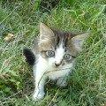 Я маленький и бедный кот,   ни кто на руки не берёт!