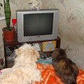 А мы тут телевизор смотрим...