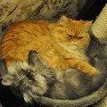 Коты в гнезде