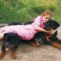 ребёнок и собаки